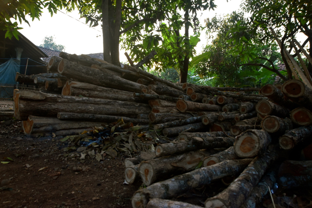 Teak logs in Cipaku, where locals are felling trees and selling the logs before the area is inundated by the Jatigede reservoir (Photo: Simon Roughneen)