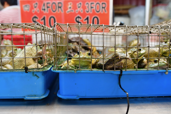 Frogs for sale in a Singapore wet market (Simon Roughneen)